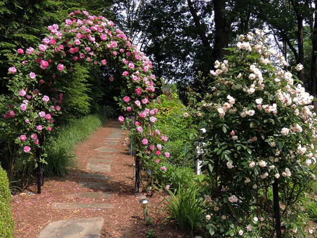 Love Garden Roses: Gardening In Upper Saddle River, NJ