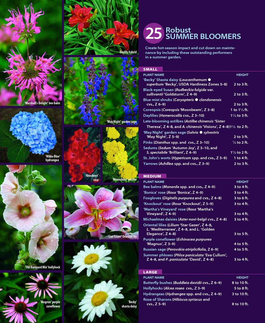 25 Robust Summer Bloomers FineGardening