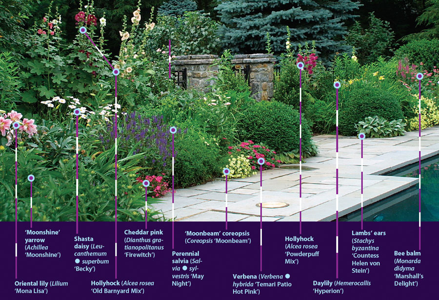 25 robust summer bloomers finegardening for Easy care shrubs front house