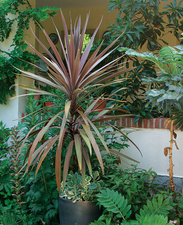 Designing with spiky plants finegardening Tall narrow indoor plants
