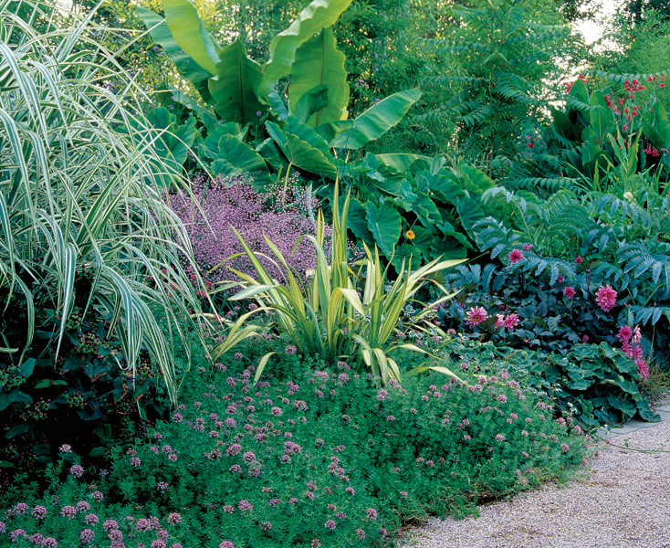 Designing with spiky plants finegardening for Spiky ornamental grass