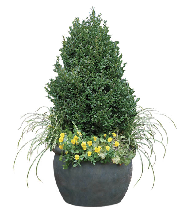 Rely on strong forms that stand out in snow Many people feel that winter containers