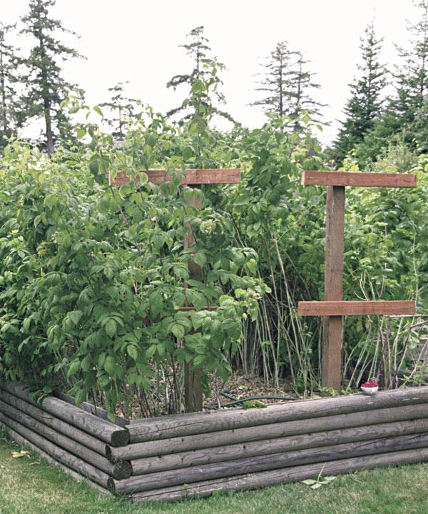 Soil For Raspberries In Raised Beds