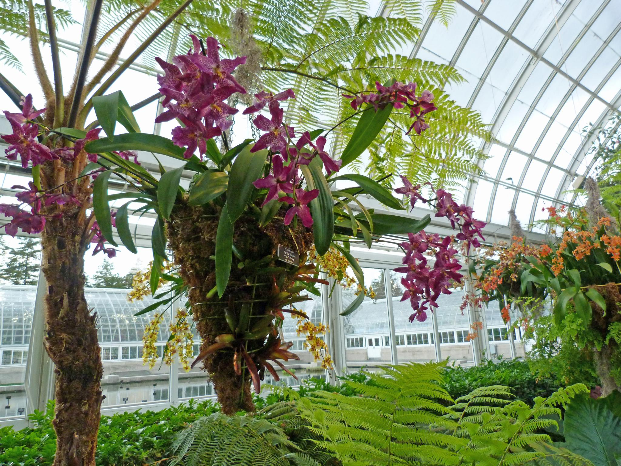 The Orchid Show At The New York Botanical Garden Finegardening