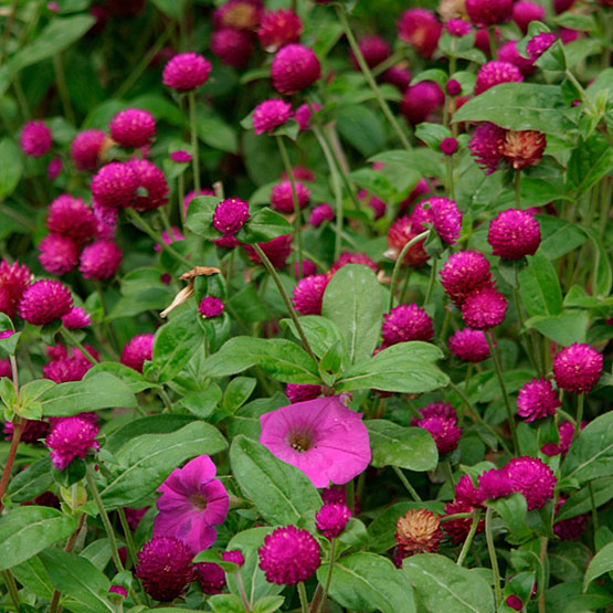 15 Deer Resistant Plants Finegardening