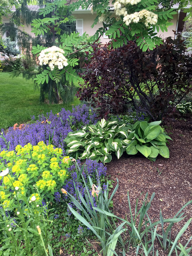 A low maintenance garden finegardening Low maintenance garden border ideas