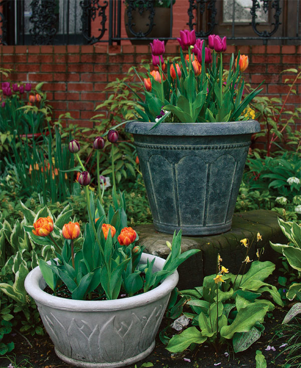 how to plant a flower garden. How To Plant Tulips In Pots A Flower Garden R