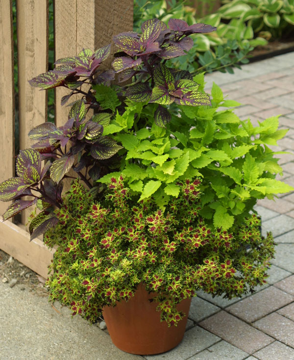 South Florida Tropical Landscape Ideas Planter Container: Great Plants: Flower Power: Grandma's Annuals