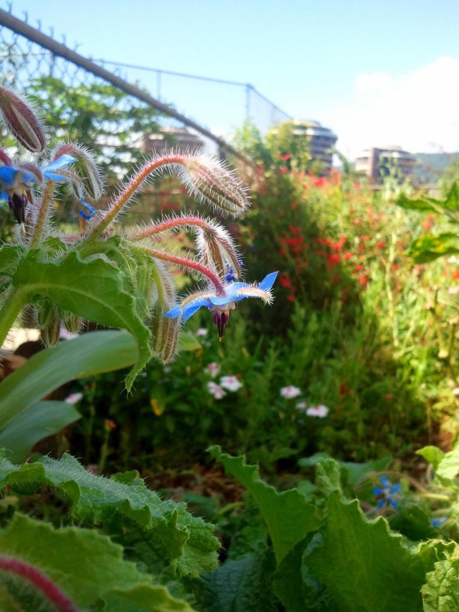 Marvelous Davidu0027s Veggie, Fruit, And Herb Garden In Hawaii