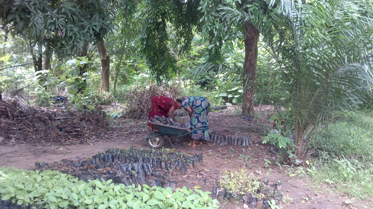 Annita's garden and nurserywork in NIGERIA! - FineGardening