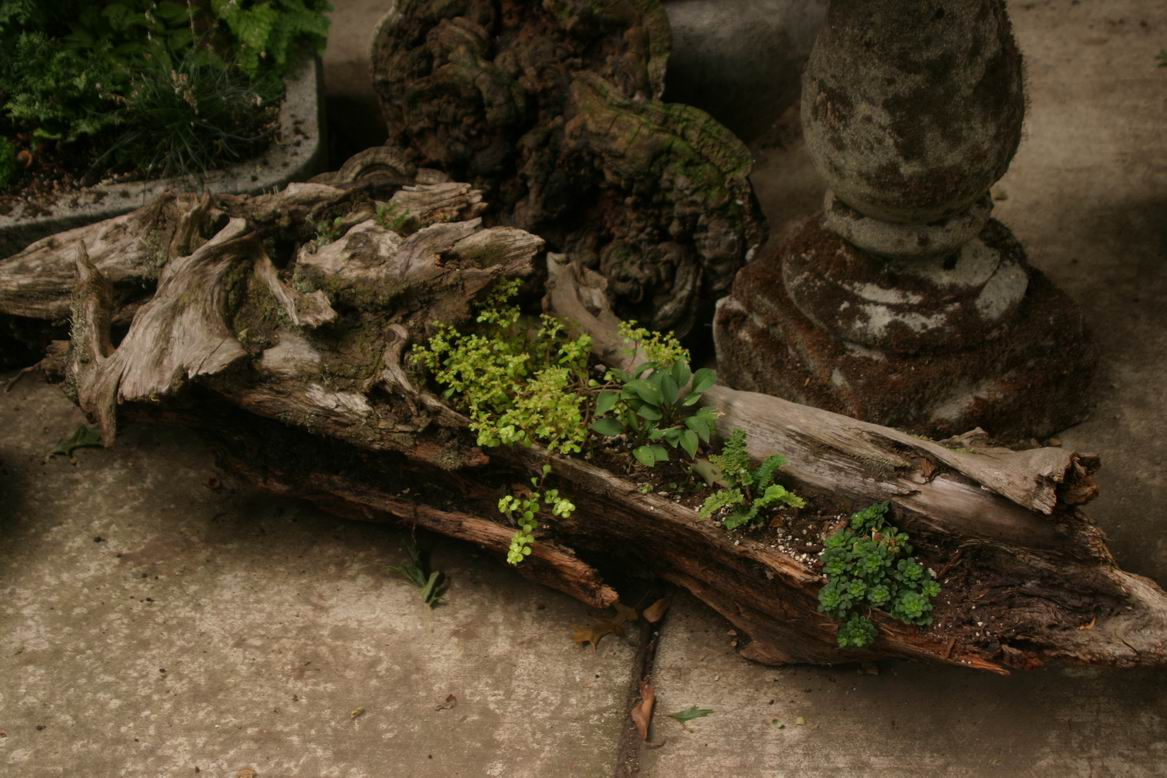 Driftwood garden finegardening Driftwood sculptures for garden