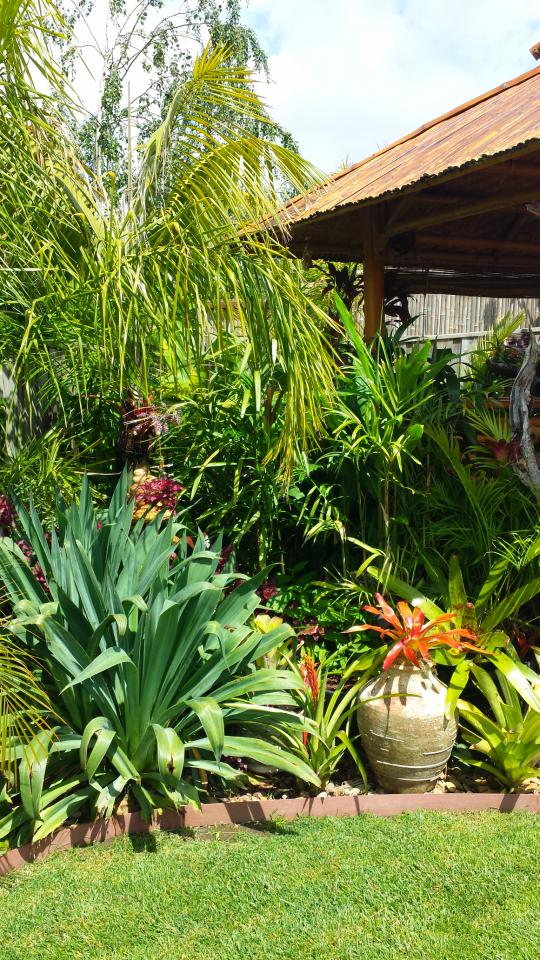 Daniel 39 s tropical garden in australia finegardening for Tropical garden designs australia