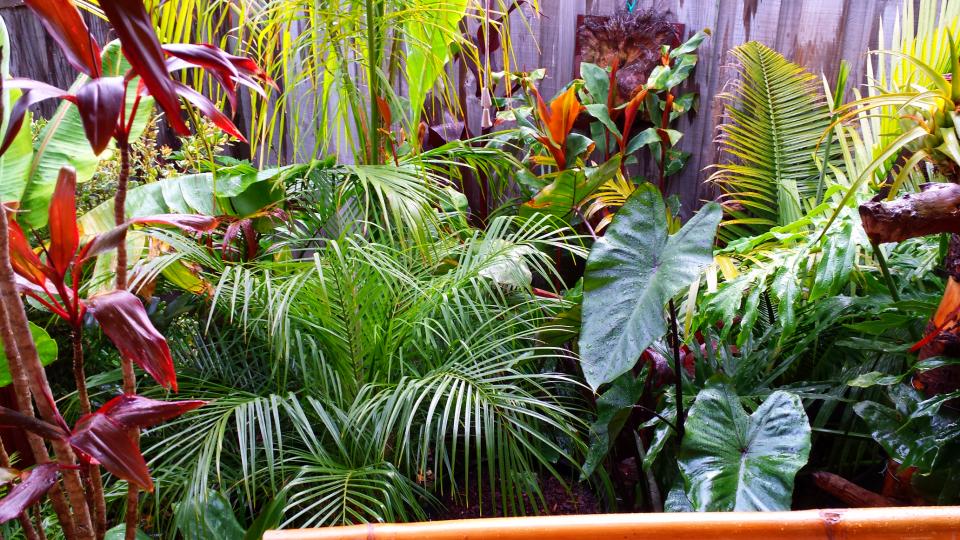 Danielu0027s Tropical Garden In AUSTRALIA