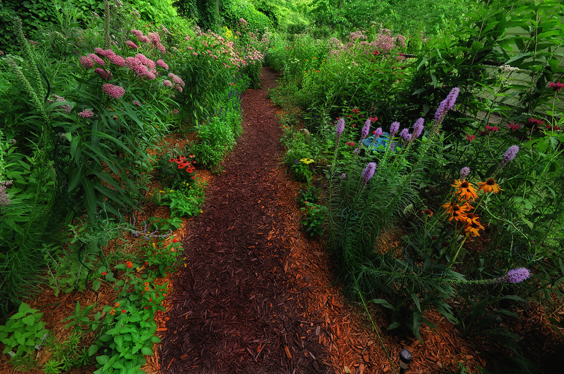 john 39 s butterfly garden in michigan finegardening