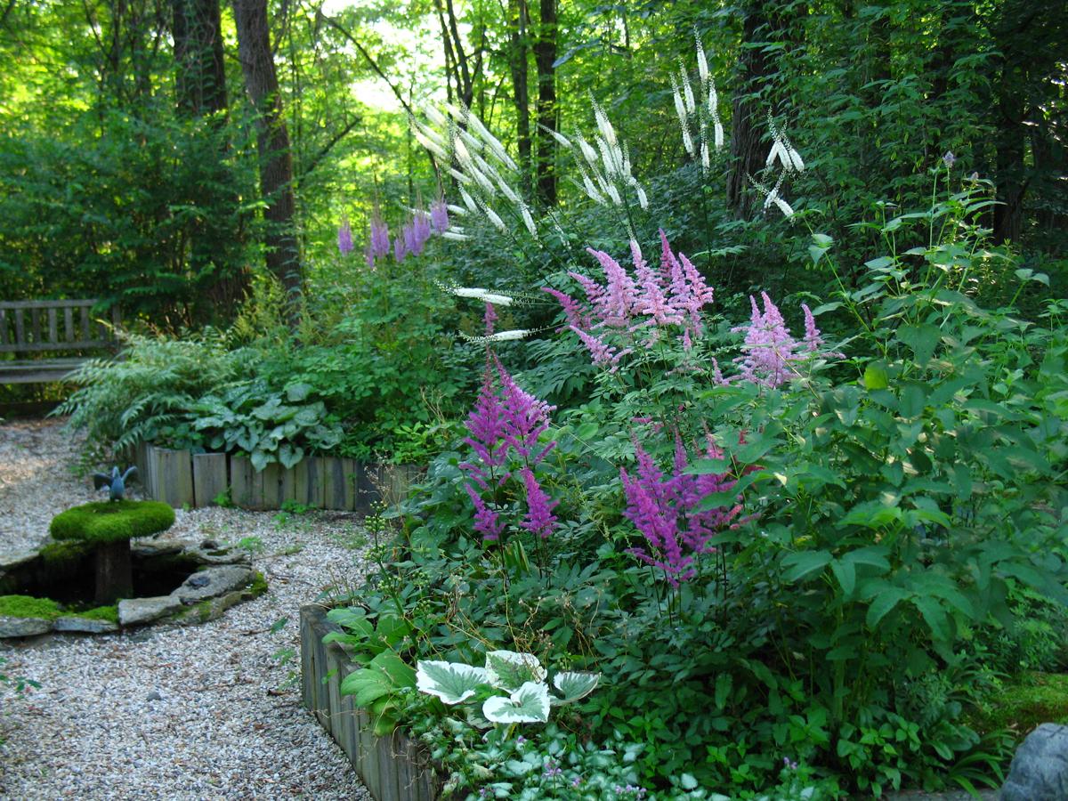 A pretty little shade garden design for Perennial garden design zone 7