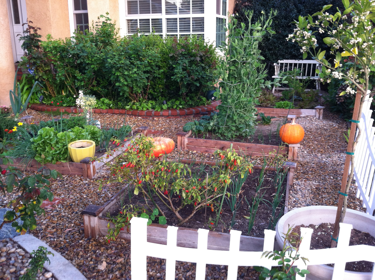 Karen 39 s no lawn front yard in california finegardening for Garden design podcast