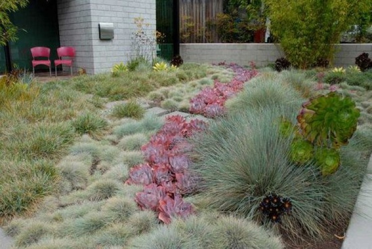 Lawn Alternatives California - Garden Inspiration on crosican mint grass alternatives, wall alternatives, bangs alternatives, patio alternatives, low maintenance grass alternatives, landscaping alternatives, rice alternatives,