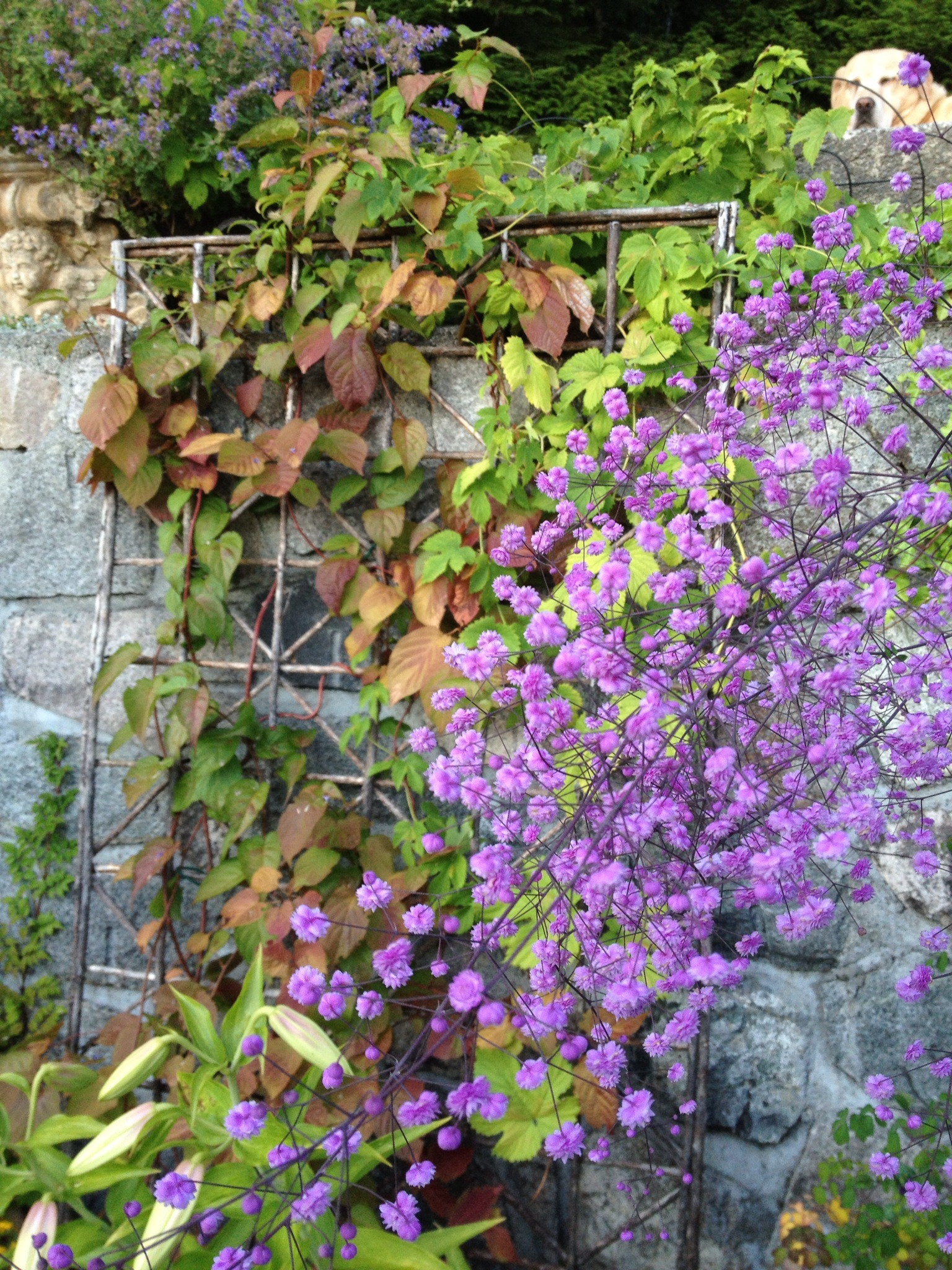 Michele S Garden In British Columbia Finegardening