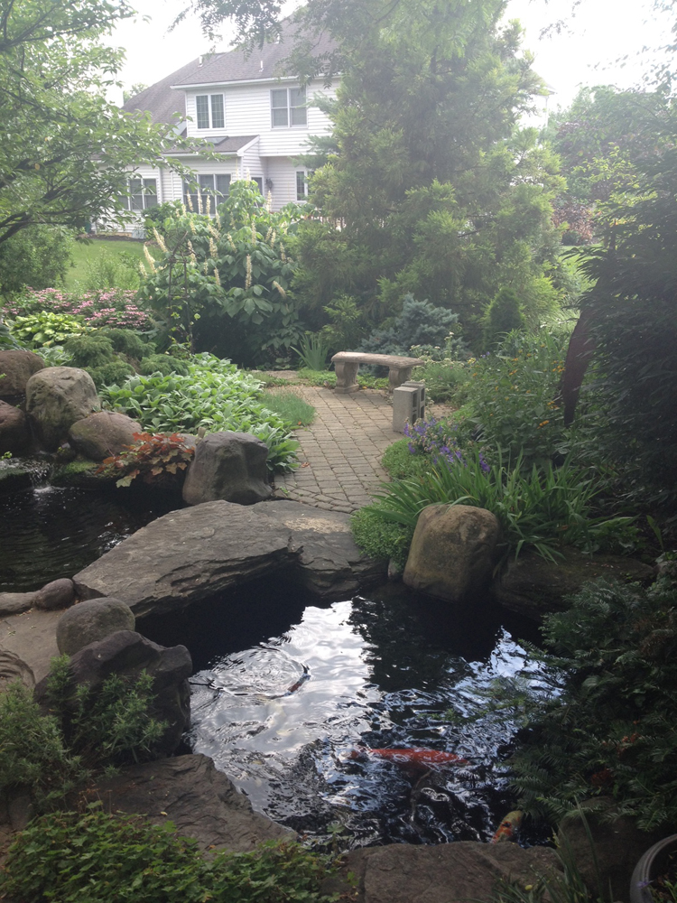 Lovey 39 s peaceful pond in pennsylvania finegardening for Koi pond zoning