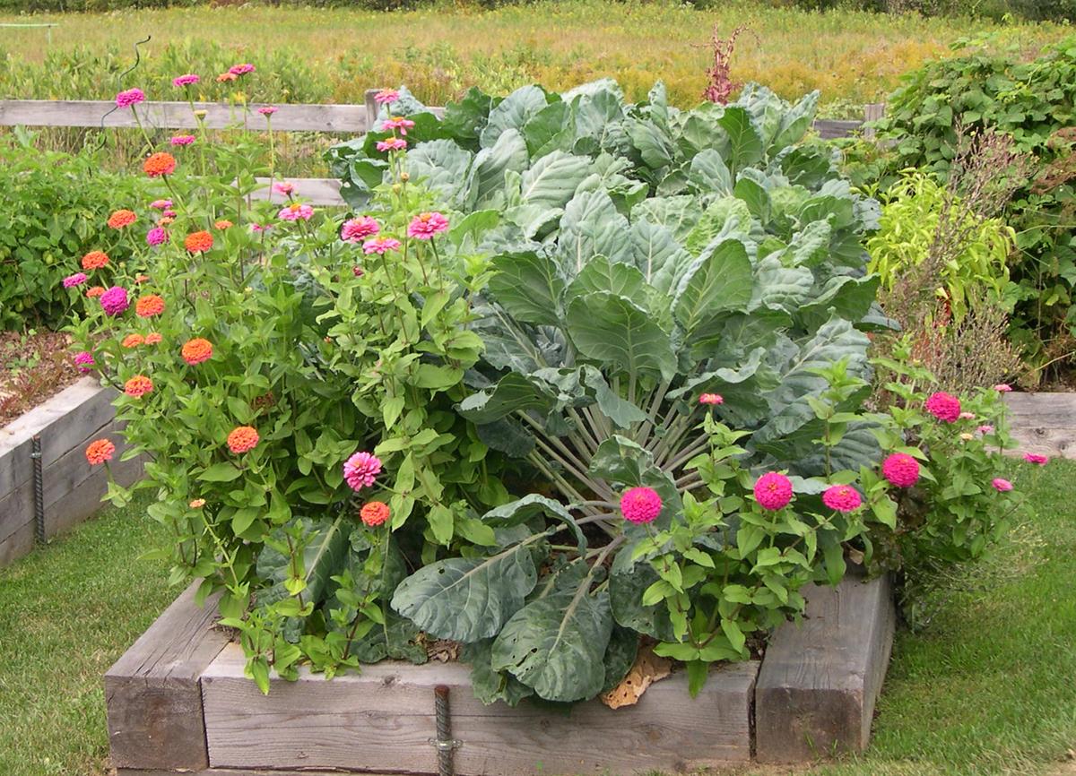 Harriet s ve able garden in Maine