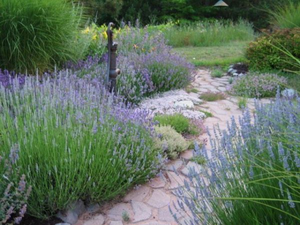 Lavender Garden Wins Backyard Garden Spaces Contest