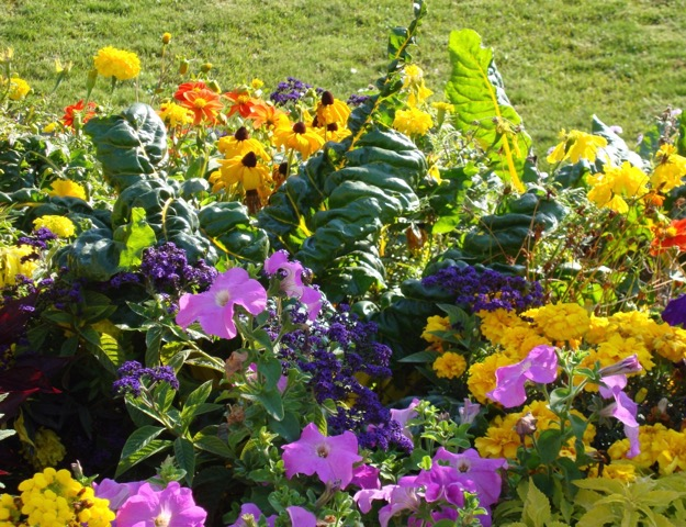 I Have Been Thinking About The Pros And Cons Of Vegetable Gardening Versus Flower  Gardening. Some People Are Of The Opinion That Flowers Are A Waste Of Good  ...