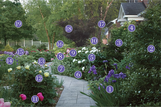 Merveilleux Plants For An Inviting Front Yard Pathway: Plant Identification