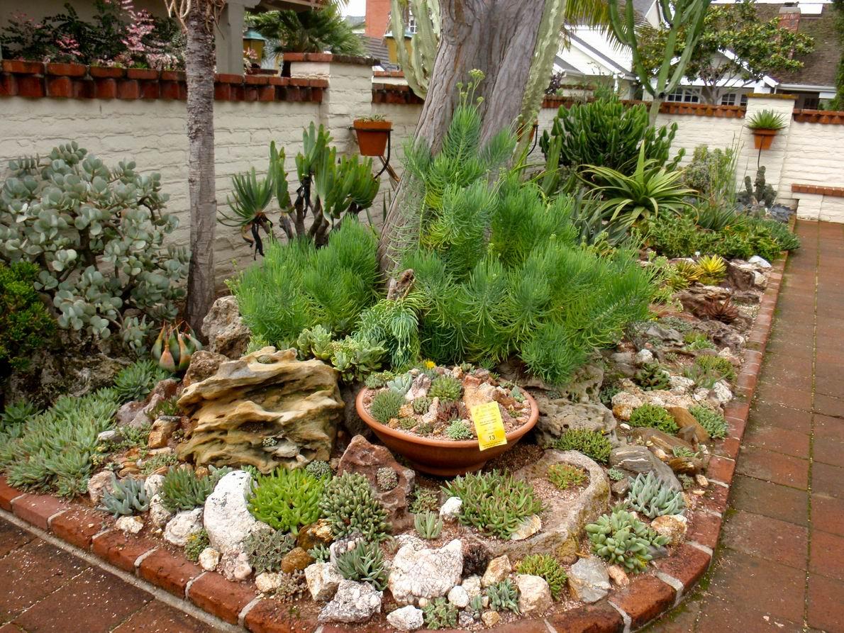 A Gem Of A Succulent Garden