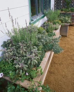 Herb Box à La Provençal Includes Sages Dwarf Purple Tricolor Sweet Lavender L Heterophylla French Dentata Thymes Lime