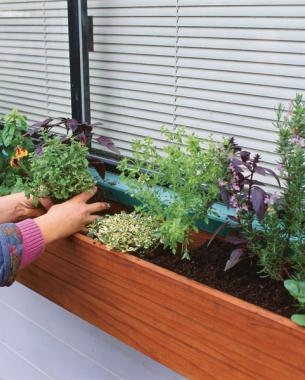 Herbs For Every Window Box Short On Garden E Grow Your Even Closer To The Kitchen