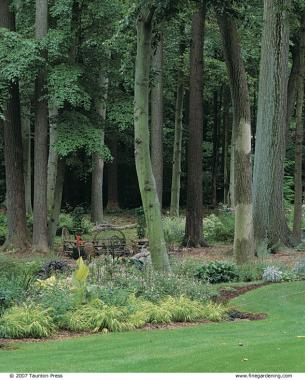 Solutions for wet shady sites finegardening for Wet garden designs