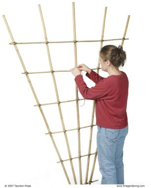 Build a bamboo trellis finegardening the number of vines on my garden wish list will soon outnumber the structures on which i can grow them is that a bad thing you ask solutioingenieria Image collections