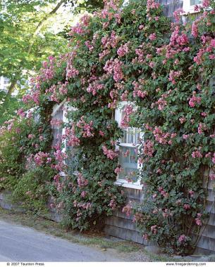 Exceptional Fine Gardening Magazine Gallery