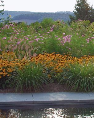short grasses can define an edge - Garden Design Using Grasses