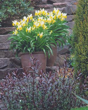 Planting Spring Bulbs In Containers Finegardening