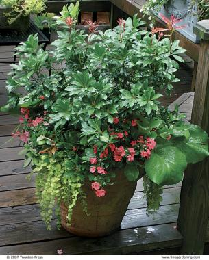3 Golden creeping Jenny is perfect for the edge of the pot