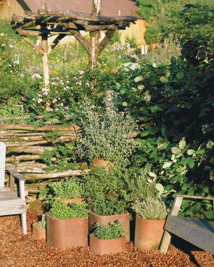 Harness Its Vigor In The Garden, Enjoy Its Bracing Flavor In The Kitchen