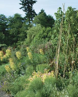 A low maintenance garden finegardening for Less maintenance plants