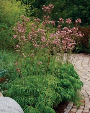 garden ground cover. Specimen Plant And Ground Cover? You Bet Garden Cover