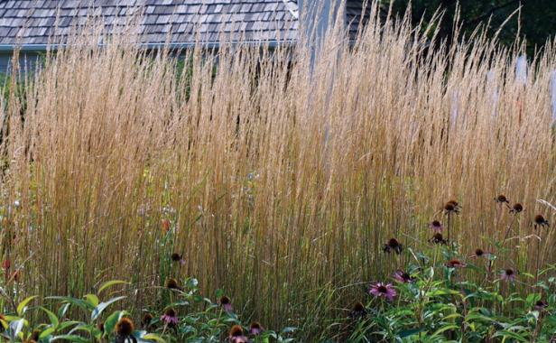ornamental grasses make dynamic hedges - Garden Design Using Grasses