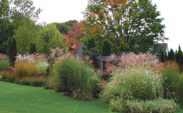 Designing with grasses finegardening for Ornamental grass bed design