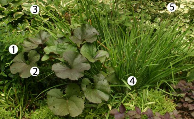 10 combinations for shade finegardening for Shade garden design zone 5