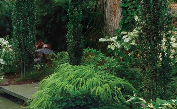 Conifers for shade finegardening for Shade garden design zone 8