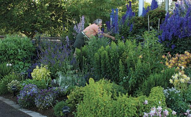 best garden plants. If You Only Grow A Handful Of Vaseworthy Flowers, These Are The Ones Need Best Garden Plants