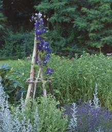 build a rustic tuteur finegardening